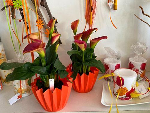 Blumen-Hofer_Callas